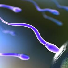 Анализ спермы (Спермограмма)