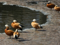 Не кроши батон: как правильно подкармливать птиц, чтобы не навредить? ИНФОГРАФИКА