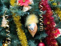 Срубил он нашу елочку под самый корешок: какими растениями можно заменить главное новогоднее дерево?