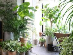 Растения, которые очистят воздух в квартире: совет агронома Тимирязевской академии
