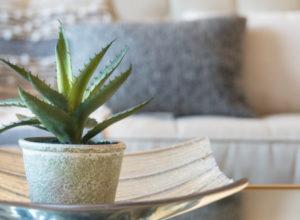 «Алоэ – в спальню, фикус – в гостиную»: эксперты назвали самые полезные для здоровья комнатные растения